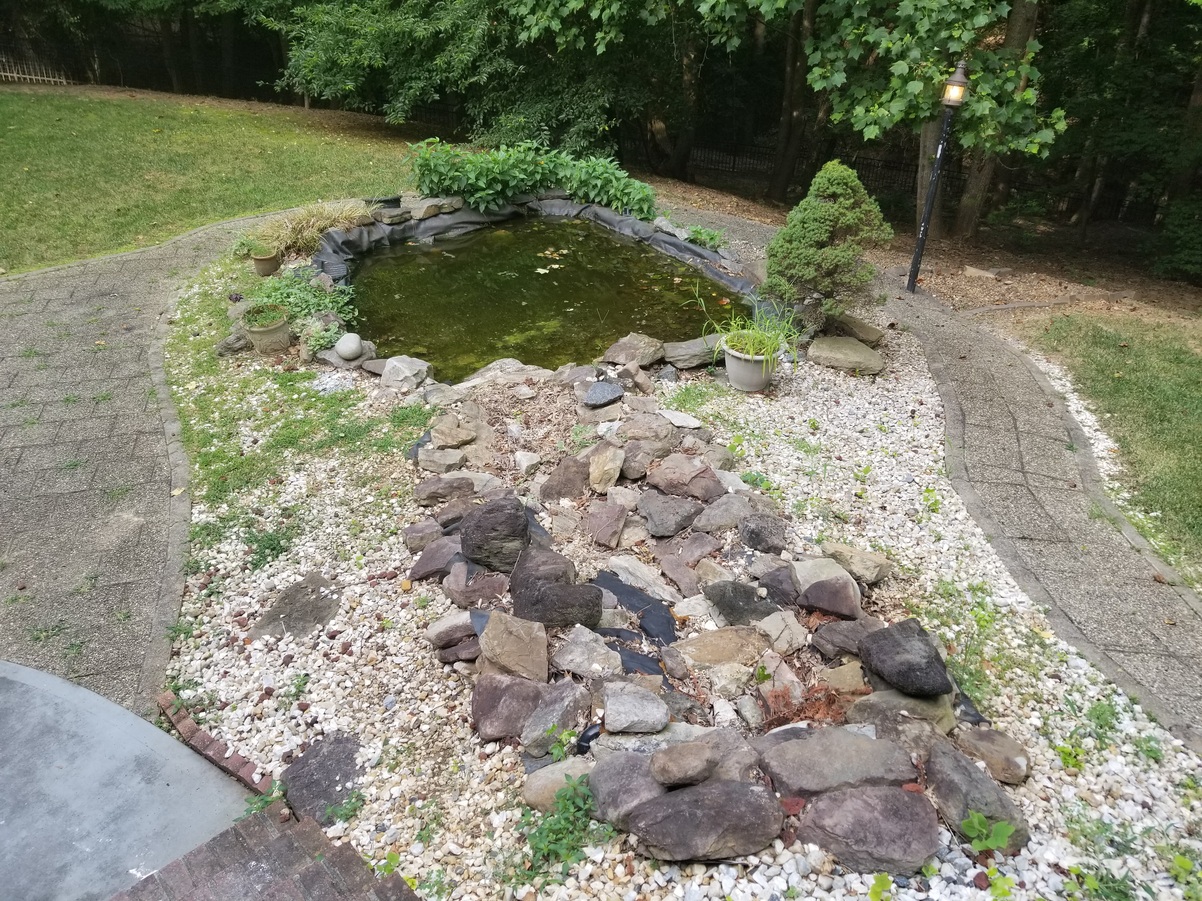Disgusting Backyard Pond in Fairfax, VA