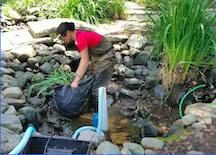 Pond Cleaning service