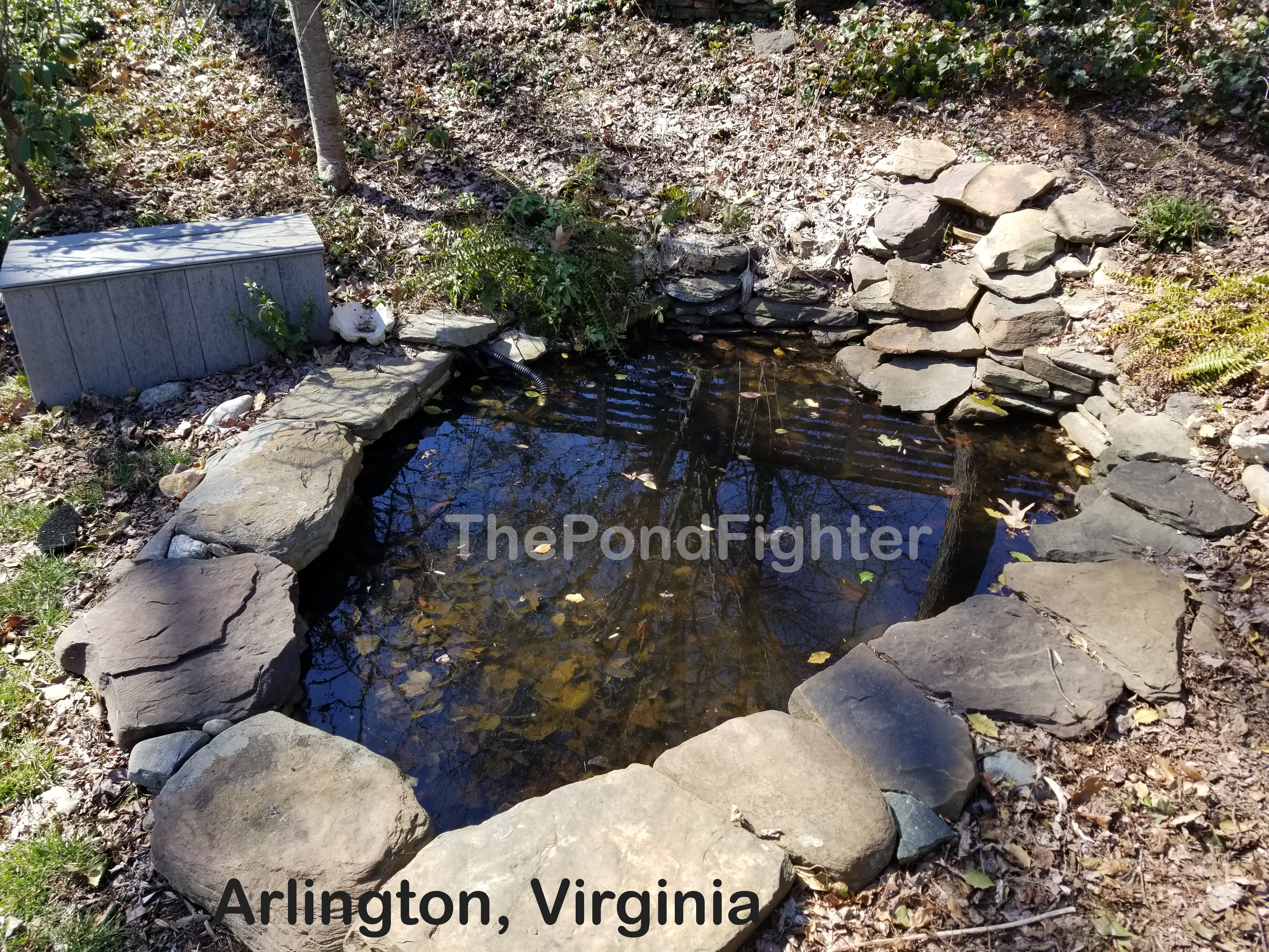 pond cleaning arlington