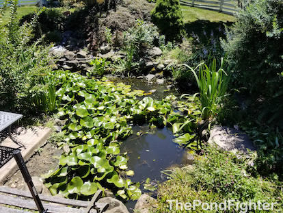 pond cleaning olney